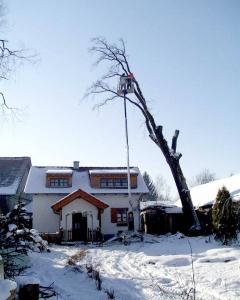 Anhänger Arbeitsbühne Dino 180T Baumfällung 2.jpg