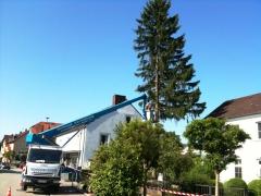LKW Arbeitsbühne Bison TKA 28 KS Baumfällung 3.jpg