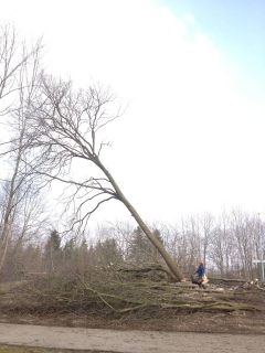 Hebebühnen Schmid Lamerdingen Baumfällung 2.JPG