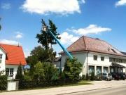 LKW Arbeitsbühne Bison TKA 28 KS Baumfällung 5.jpg